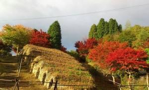 信楽散策路の紅葉